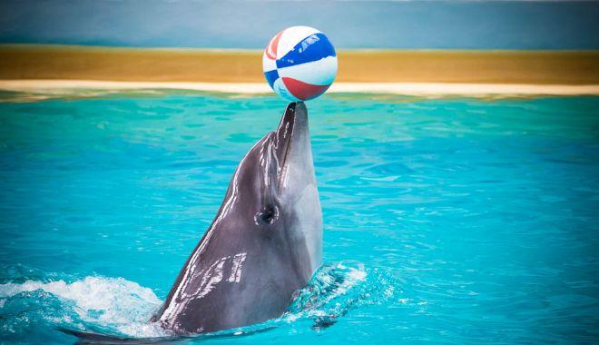 Foto: Delfini și povești, cu un singur click