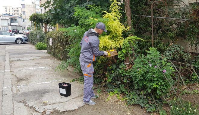 Administrația locală a dat startul deratizării în Constanța - deratizare1-1570563022.jpg
