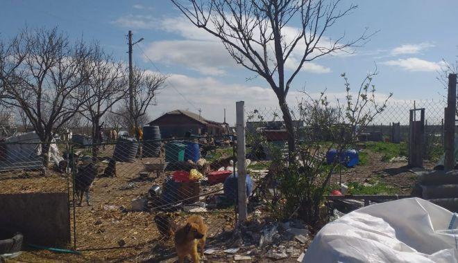 GALERIE FOTO / VIDEO. Descindere la un adăpost de câini din judeţul Constanţa. Animale, găsite în stare gravă - descindere3-1618476889.jpg