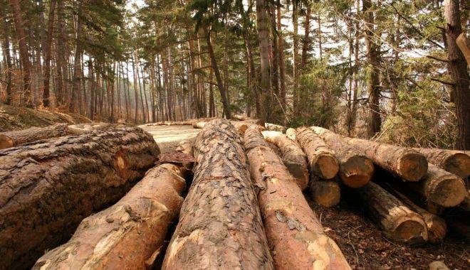 """Foto: Proiect pentru înființarea  """"DNA-ului Pădurilor"""""""