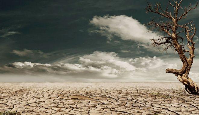 Omenirea se aşteaptă la o criză alimentară în 10 sau 15 ani. Cum se va descurca România - drought-1617955133.jpg