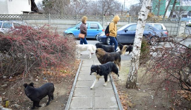 Foto: Ce se întâmplă cu câinii maidanezi din Constanța.  Ce soluție a găsit Primăria