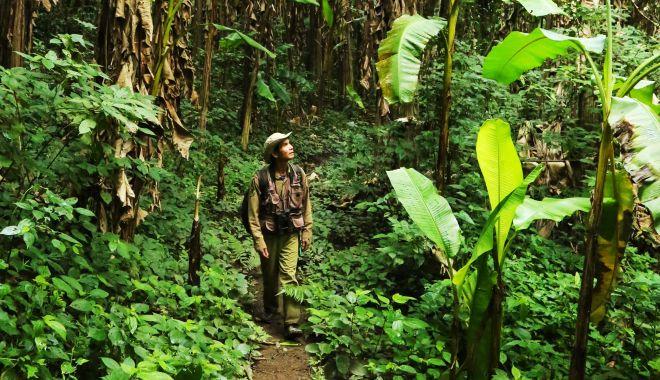 Educație în junglă - educatie-1618228807.jpg