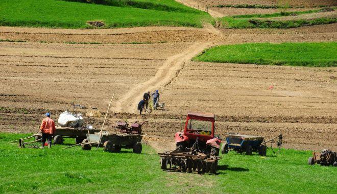 Foto: Explozie de oferte pe piața terenurilor agricole din județul Constanța