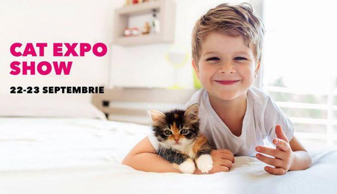 Expoziție  de pisicuțe,  în week-end, la VIVO! Constanța - expozitiepisicivivo-1537540891.jpg
