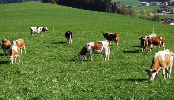 """Fermierii """"falşi"""", excluşi de la subvenţiile APIA - fermieriifalsi-1613413086.jpg"""