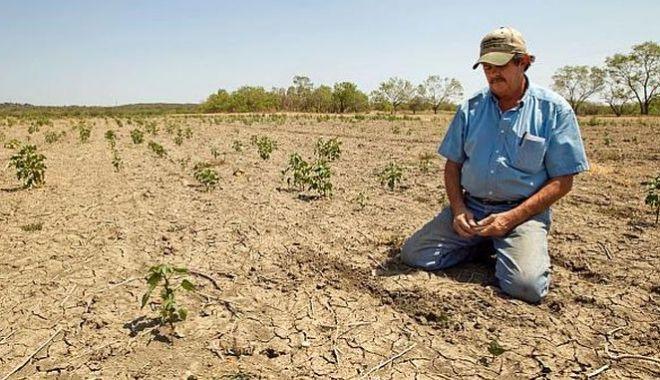 Foto: Fermierii sunt disperați. Solicită plata despăgubirilor în regim de urgență