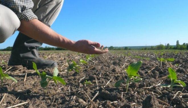Anul trecut Guvernul a alocat pentru despăgubirile de secetă 1,1 miliarde de lei - fermierseceta668x445-1614187157.jpg