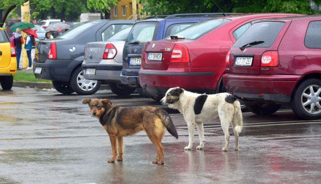 Maidanezii, stăpâni pe Constanța! De astăzi, se reia capturarea câinilor comunitari - fond-1589731818.jpg