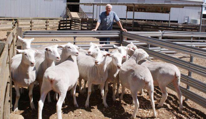 De ce nu mai sunt profitabile fermele de animale. Tot mai mulţi proprietari vor să le vândă - fond2-1623347881.jpg