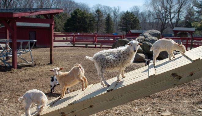 De ce nu mai sunt profitabile fermele de animale. Tot mai mulţi proprietari vor să le vândă - fond3-1623347893.jpg