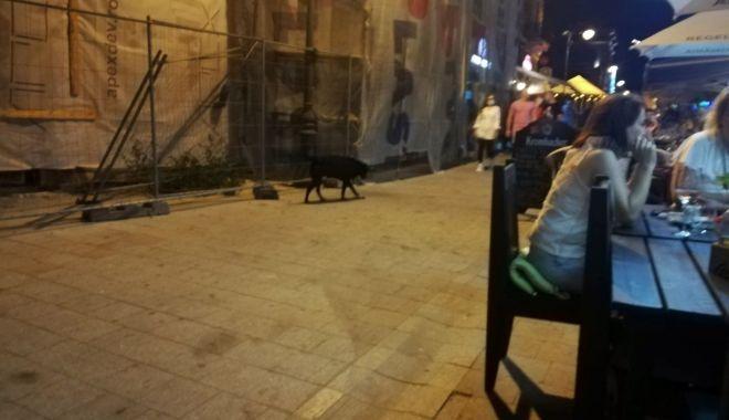 Maidanezii sperie turiștii din centrul vechi al Constanței.
