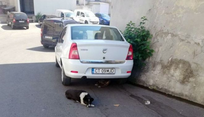 """Foto: Constanța, fieful câinilor fără stăpân! """"Ne temem să ne apropiem, că imediat își arată colții!"""""""
