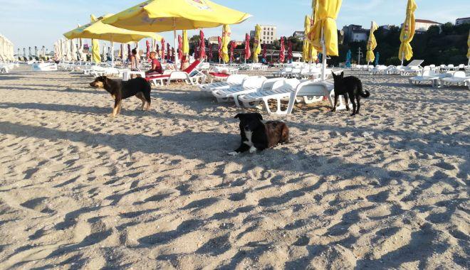 Teroare pe plaje! Haite de maidanezi flămânzi, printre șezlonguri! - fondmaidaneziplajamodern2-1597083267.jpg