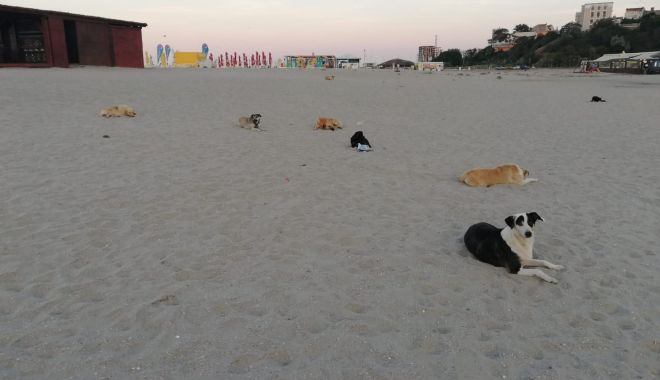 Teroare pe plaje! Haite de maidanezi flămânzi, printre șezlonguri!