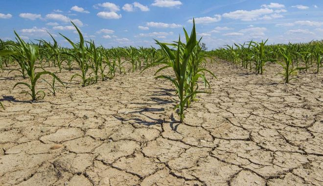Foto: Fermierii afectați de secetă pot fi despăgubiți. Când trebuie transmise cererile