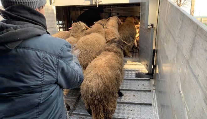 """Foto: Unde au ajuns oile salvate de pe """"vaporul morții"""" răsturnat în Portul Midia"""