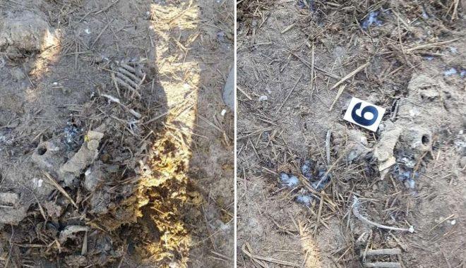 Dezastru ecologic la Dunăre: mii de oi moarte în Portul Midia, îngropate în spatele crematoriului din Tulcea! - fondovineingropate132-1611256476.jpg