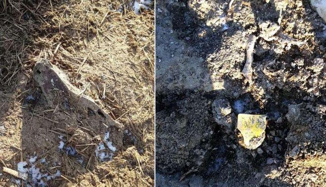 Dezastru ecologic la Dunăre: mii de oi moarte în Portul Midia, îngropate în spatele crematoriului din Tulcea! - fondovineingropate2-1611256451.jpg