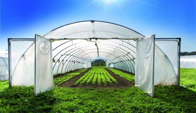 Pregătiri pentru grădină şi livadă. Ce trebuie să ştiţi pentru a obţine recolte bogate - fondpregatireagradinii-1611255853.jpg