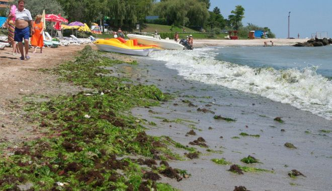 """Foto: Tone de alge, pe plajele românești. """"E o barbarie să muncești la furcă în mileniul III!"""""""