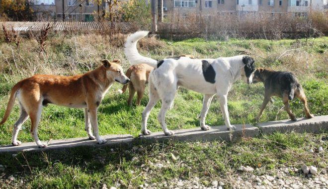 Foto: Alo, Primăria Constanța? Maidanezii agresivi ne fac viața un calvar!