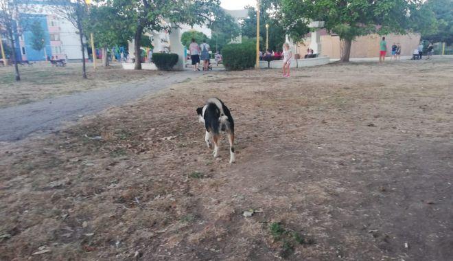 Constănţenii, abandonaţi în colţii câinilor fără stăpân. Vom scăpa vreodată de maidanezi? - fotofondcatei-1599585500.jpg