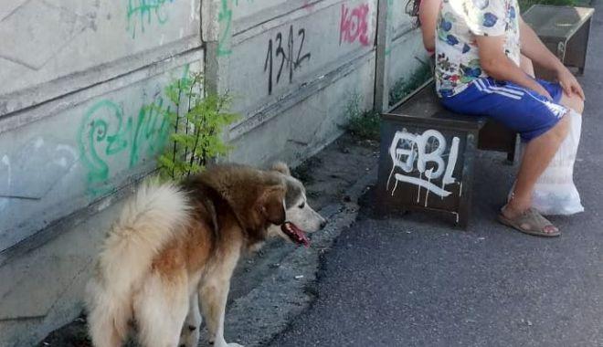 Constănţenii, abandonaţi în colţii câinilor fără stăpân. Vom scăpa vreodată de maidanezi? - fotofondcatei2-1599585522.jpg