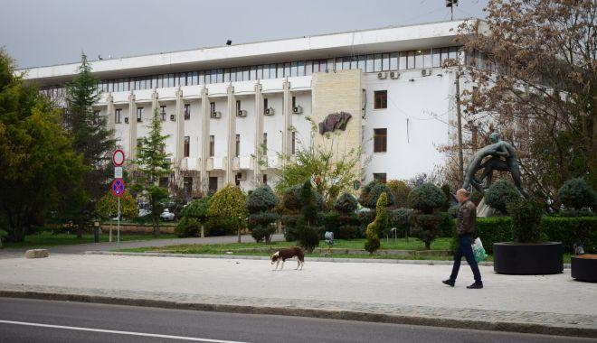 Maidanezii, stăpâni pe Constanța! De astăzi, se reia capturarea câinilor comunitari - fotofondmaidanezi11-1589731730.jpg