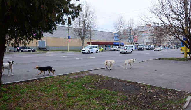 Maidanezii, stăpâni pe Constanța! De astăzi, se reia capturarea câinilor comunitari - fotofondmaidanezi2-1589731710.jpg