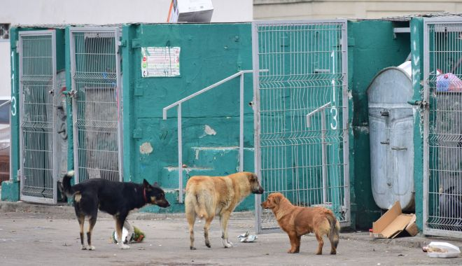 Maidanezii, stăpâni pe Constanța! De astăzi, se reia capturarea câinilor comunitari - fotofondmaidanezi22-1589731749.jpg