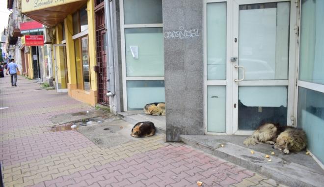 Foto: Maidanezii fac legea la Constanța! Adăpostul e ferecat, iar străzile - pline de câini