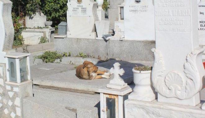 Foto: Maidanezii, refugiați în cimitir. Și-au făcut culcușuri printre morminte și pândesc din bălării