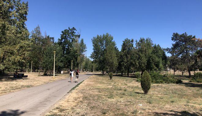 Pârjol în Parcul Tăbăcărie. Iarbă arsă și copaci uscați, în cel mai mare parc al Constanței - fotofondparcultabacarie12-1597678906.jpg