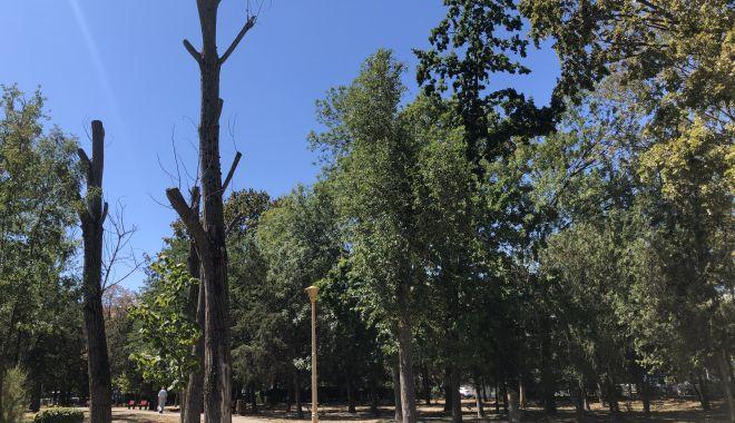 Pârjol în Parcul Tăbăcărie. Iarbă arsă și copaci uscați, în cel mai mare parc al Constanței - fotofondparcultabacarie19-1597678934.jpg