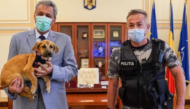 Foto: Ordonanță pentru înființarea Poliției Animalelor. Cum vor putea acționa oamenii legii