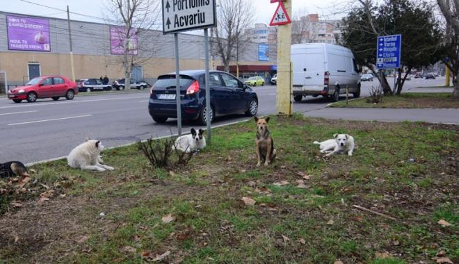 Foto: Sufocați de rahați! Cine adună maidanezii de pe străzile din Constanța