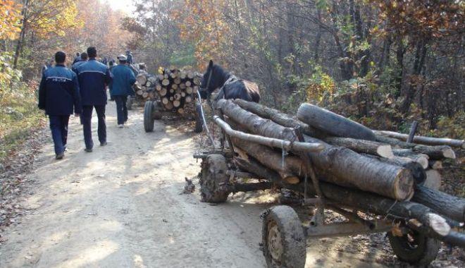Foto: Poliția Constanța le-a venit de hac hoților de lemne