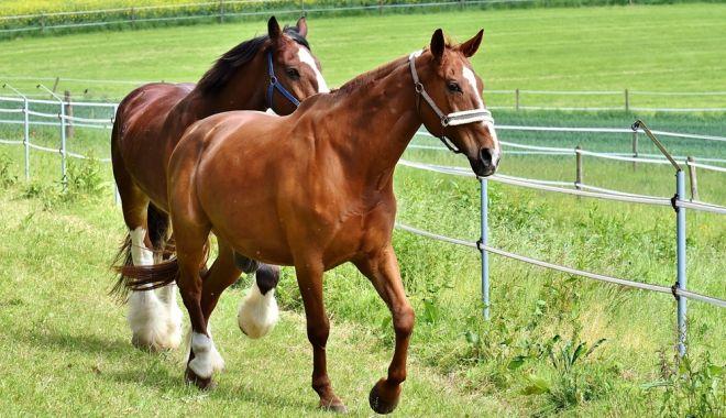 Top 5 rase de cai omologate în România - httpswwwcugetliberrotop5rasedeca-1614949193.jpg