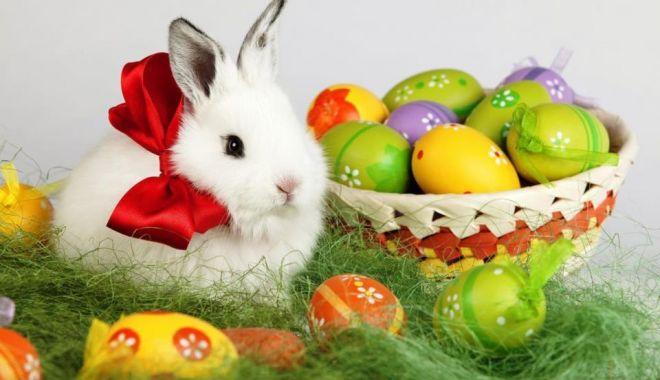 Viorica Dăncilă: Sărbători luminate și binecuvântate credincioșilor care sărbătoresc Paștele și urări de bine pentru Florii - iepure-1555834072.jpg