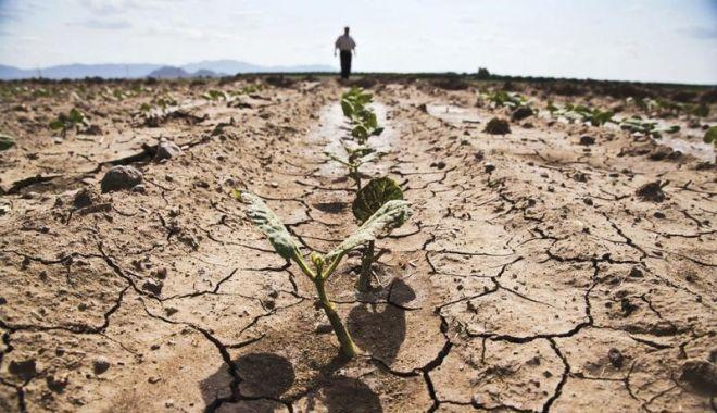Foto: Ministrul Agriculturii: Despăgubirile pentru fermierii afectați de secetă vor fi virate după rectificarea bugetară