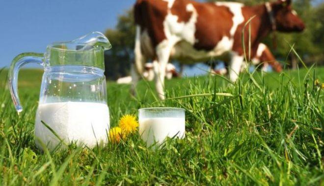 Industria laptelui merge din inerţie - industrialapteluimaimult-1605804914.jpg