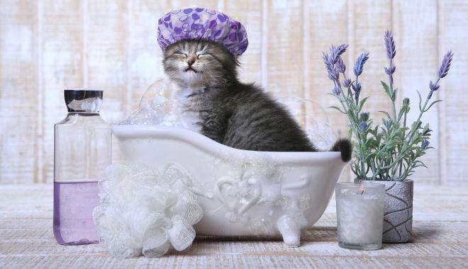 Instrucțiuni de spălat pisica - instructiuni-1606055181.jpg