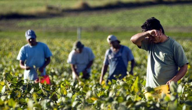 Foto: La ce riscuri sunt supuși lucrătorii din agricultură