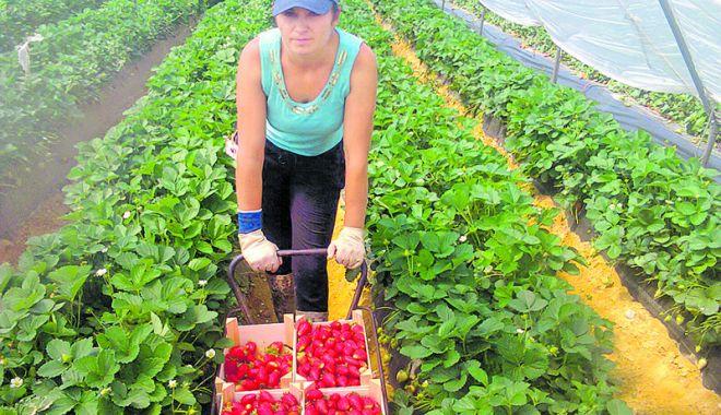 Foto: Joburi în străinătate. Se caută muncitori necalificați în agricultură