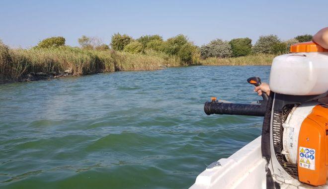 Foto: Acțiuni de dezinsecție, pe Lacul Siutghiol