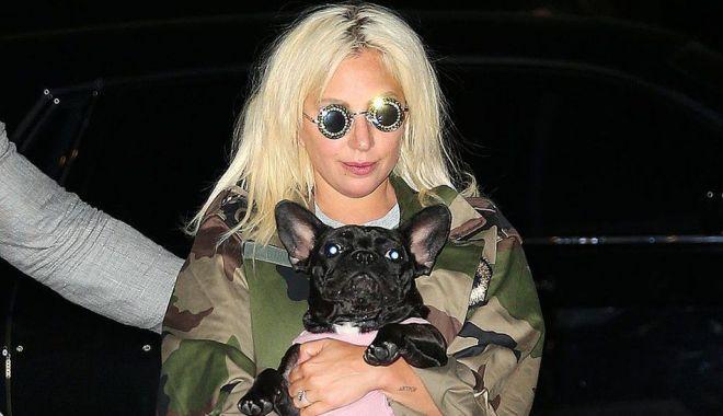 BBC: Cinci persoane arestate în cazul răpirii câinilor lui Lady Gaga - lady-1619763572.jpg