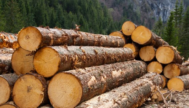 Foto: Anul trecut s-a recoltat un volum brut de 18,904 milioane metri cubi de lemn