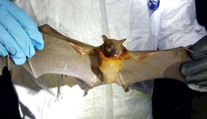 Oamenii de știință din Wuhan recunosc că au fost mușcați de lilieci infectați cu Covid - liliac-1610882326.jpg