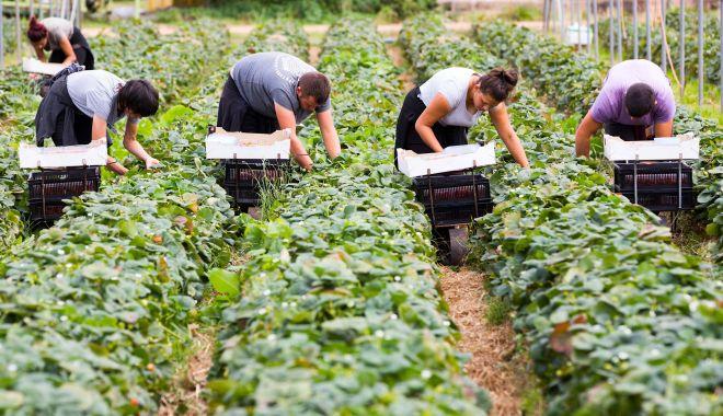 Lucrătorii români vor plăti mai mult pentru a lucra în UK - lucratoriiromani-1611307121.jpg